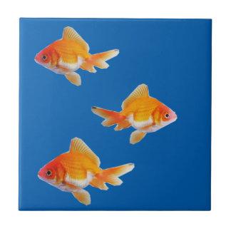 Teja del Goldfish