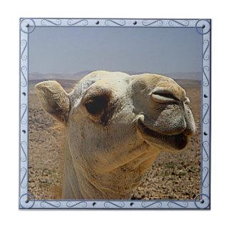 Teja principal del camello