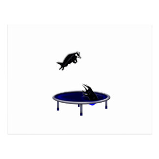 tejones trampolining postal