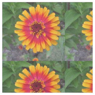 Tela Flor amarillo-naranja de oro del Zinnia