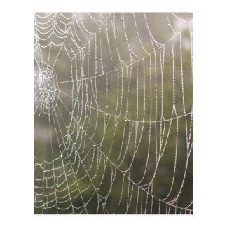Telaraña de la araña tarjetones