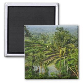 Terraza Ricefield en Bali Imán