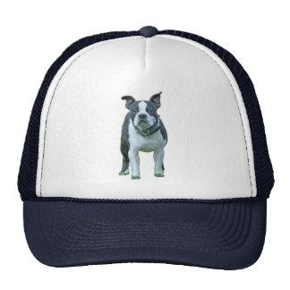 Terrier 1b de Boston Gorra