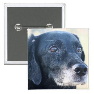 Tess - Labrador negro Photo-3 Pin