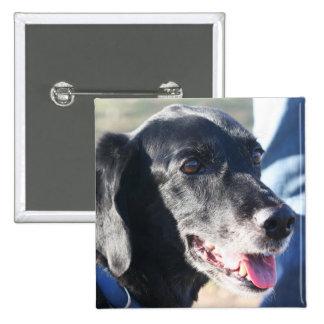 Tess - Labrador negro Photo-4 Pins