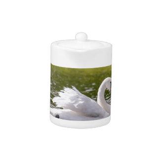 Tetera Cisne blanco en un lago