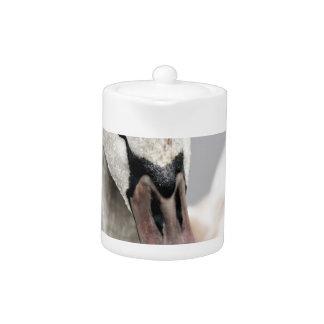 Tetera Cisne orgulloso ser un pájaro de agua del orgullo