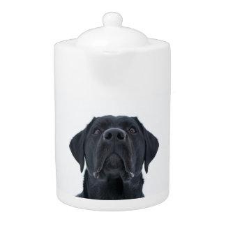 Tetera negra del laboratorio, perro magnífico