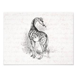 Texto del ejemplo retro de la jirafa de los 1800s  foto