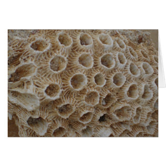 Textura coralina tarjeta de felicitación
