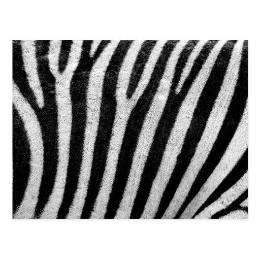 textura de la piel de la cebra tarjeta postal | Zazzle