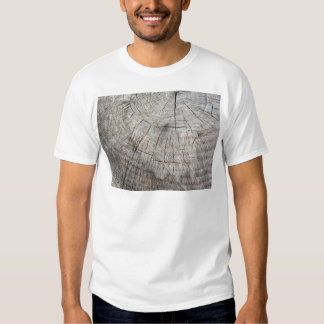 Textura de madera del tronco de árbol cortado de camisas