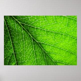 Textura verde de la hoja póster