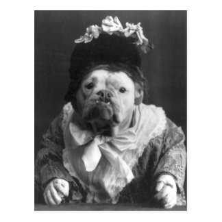 Tía Maude Dog Postal