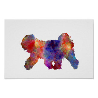 Tibetan Terrier in watercolor Póster