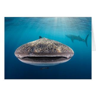 Tiburón de ballena, vista delantera, Indonesia Tarjeta