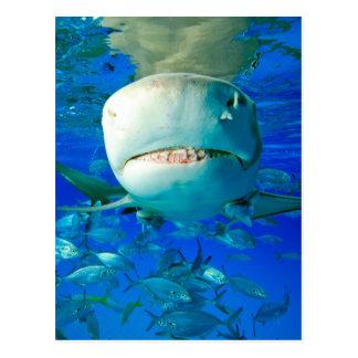 Tiburón de limón postal