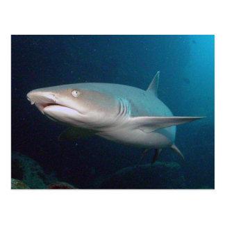 Tiburón del filón de Whitetip Postal