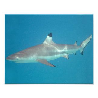 Tiburón que nada bajo el agua foto