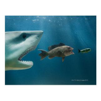 Tiburón que persigue la lubina que persigue al postal