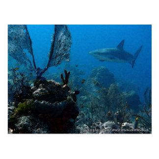 Tiburones bahameses del filón de la edición del postal