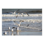 Tiempo de la gaviota en la playa fotos