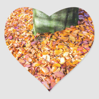 Tierra alrededor del tronco de árbol cubierto con pegatina en forma de corazón