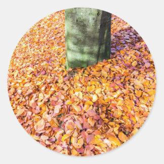 Tierra alrededor del tronco de árbol cubierto con pegatina redonda