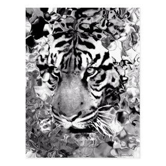 Tiger__Postcard Postales