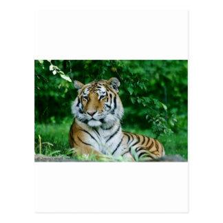 Tigre 1 postal