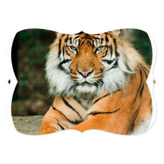 Tigre anaranjado invitación 12,7 x 17,8 cm