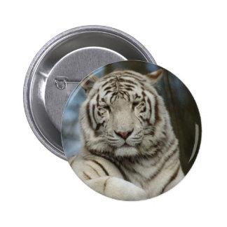 Tigre blanco chapa redonda de 5 cm
