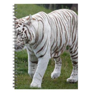 Tigre blanco cuaderno
