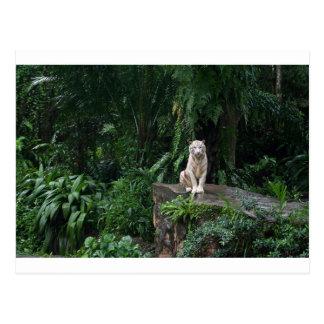 Tigre blanco en la selva postal