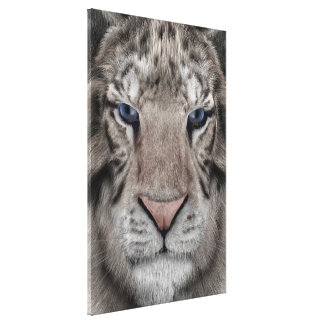 Tigre blanco lienzo