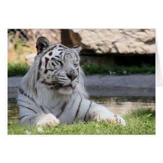 Tigre blanco Notecard Tarjeta Pequeña
