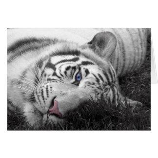 Tigre blanco tarjetón
