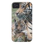 Tigre Cub Case-Mate iPhone 4 Fundas