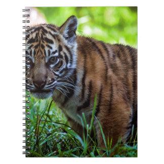 Tigre Cub de Sumatran de los alquileres Cuaderno