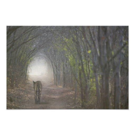 Tigre de Bengala en el bosque en Ranthambore Fotos