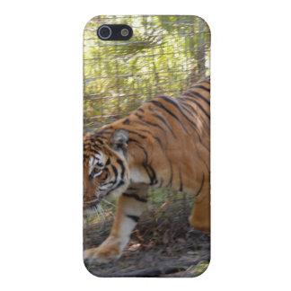 Tigre de Bengala i iPhone 5 Protectores