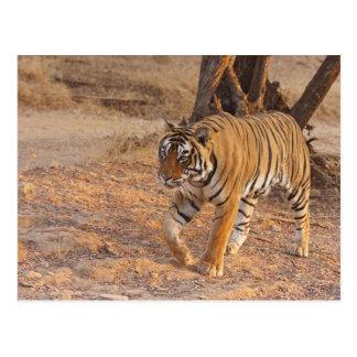 Tigre de Bengala real en el movimiento, Postal