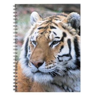 Tigre de Bengala real estoico de los alquileres Cuaderno