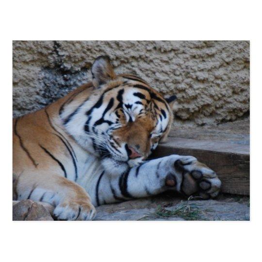 tigre del naptime postal