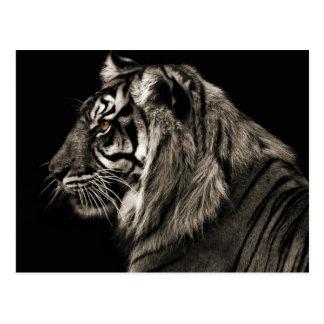 Tigre del tigre postal