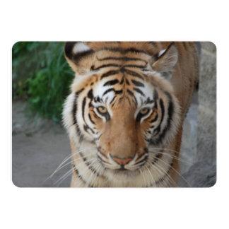 Tigre dulce invitación 12,7 x 17,8 cm