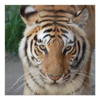 Tigre dulce invitación 13,3 cm x 13,3cm