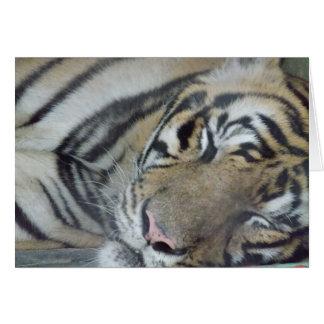 Tigre el dormir tarjeta pequeña