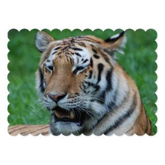 Tigre el gruñir invitación 12,7 x 17,8 cm