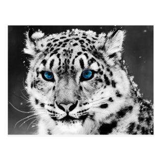Tigre-en-blanco-y-negro jpg postal